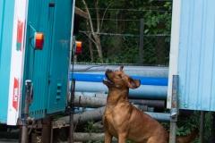 RettungshundestaffelWiesbaden-Trainingstage2017-49