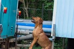 RettungshundestaffelWiesbaden-Trainingstage2017-50