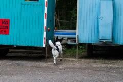 RettungshundestaffelWiesbaden-Trainingstage2017-51