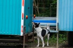 RettungshundestaffelWiesbaden-Trainingstage2017-52