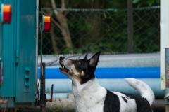 RettungshundestaffelWiesbaden-Trainingstage2017-53