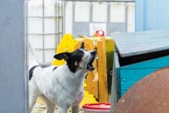 RettungshundestaffelWiesbaden-Trainingstage2017-55