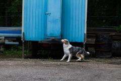 RettungshundestaffelWiesbaden-Trainingstage2017-59