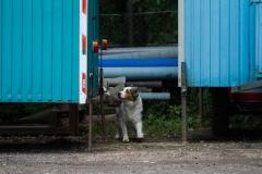RettungshundestaffelWiesbaden-Trainingstage2017-60