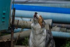 RettungshundestaffelWiesbaden-Trainingstage2017-61