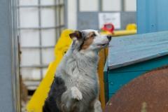 RettungshundestaffelWiesbaden-Trainingstage2017-62