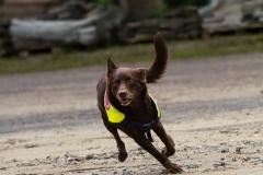 RettungshundestaffelWiesbaden-Trainingstage2017-63