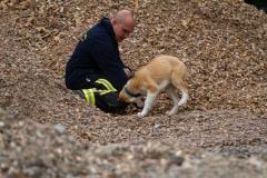 RettungshundestaffelWiesbaden-Trainingstage2017-64