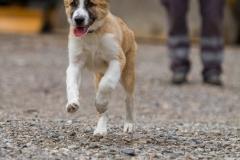 RettungshundestaffelWiesbaden-Trainingstage2017-65