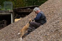 RettungshundestaffelWiesbaden-Trainingstage2017-66