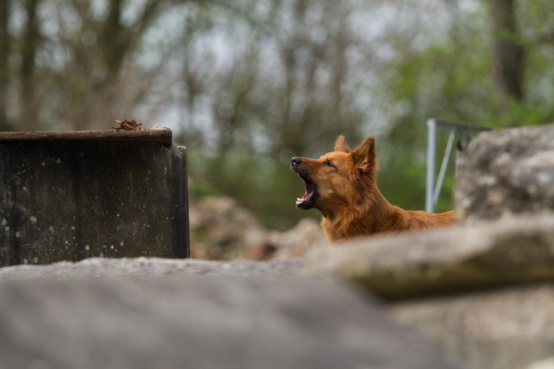 RettungshundestaffelWiesbaden-Trümmer_Phoebe