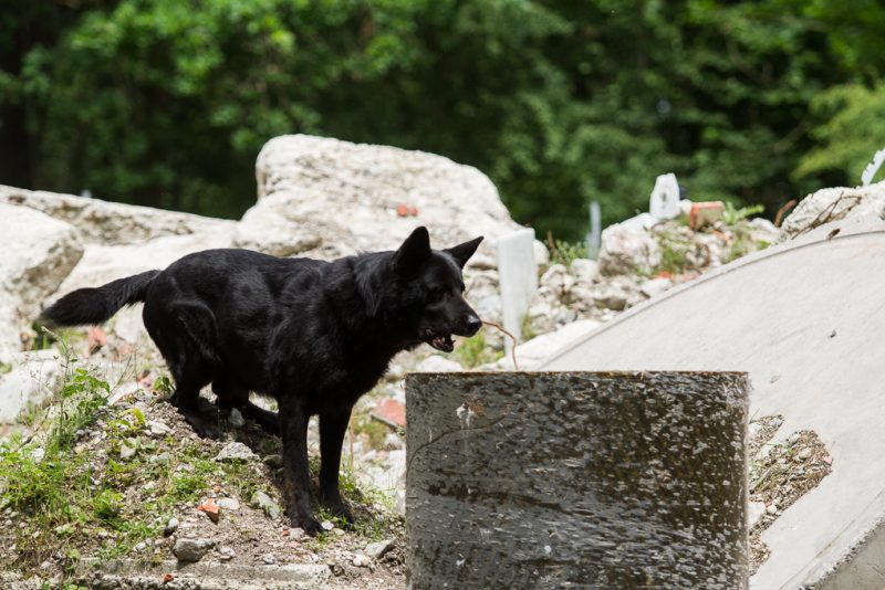 RettungshundestaffelWiesbaden-TrainingstageHochbrück2017-8