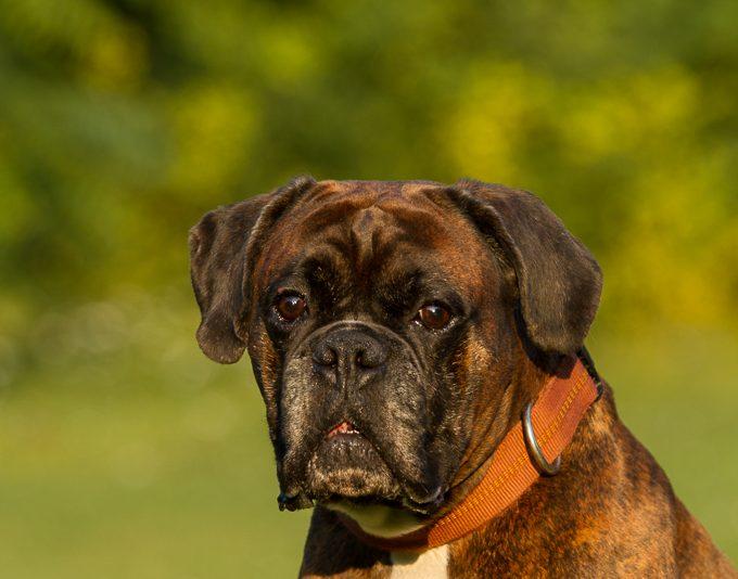 RettungshundestaffelWiesbaden-Kamillo