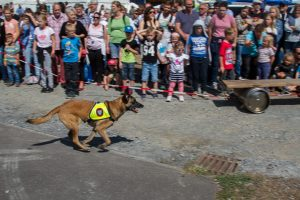 RettungshundestaffelWiesbaden-PPWesthessen_10